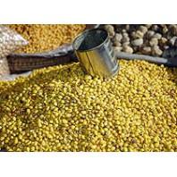 Graines de soja dépelliculées BIO