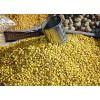 Graines de soja dépelliculées BIO*